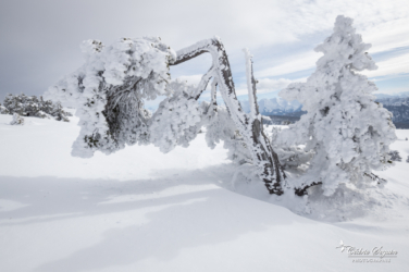 Survivre à l'hiver... (74)