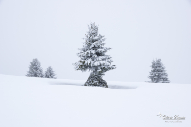 Conditions hivernales (74)