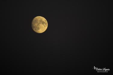 Sous le regard lunaire