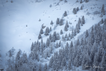 Au coeur de l'hiver (38)